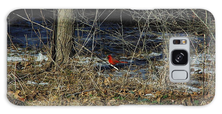 Texas Galaxy S8 Case featuring the photograph Lone Cardinal by Robyn Stacey