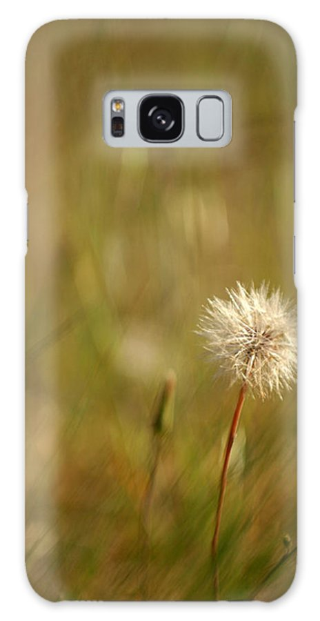 Dandelion Flower Wildflower Nature Botanical Galaxy S8 Case featuring the photograph Lone Dandelion 2 by Jill Reger