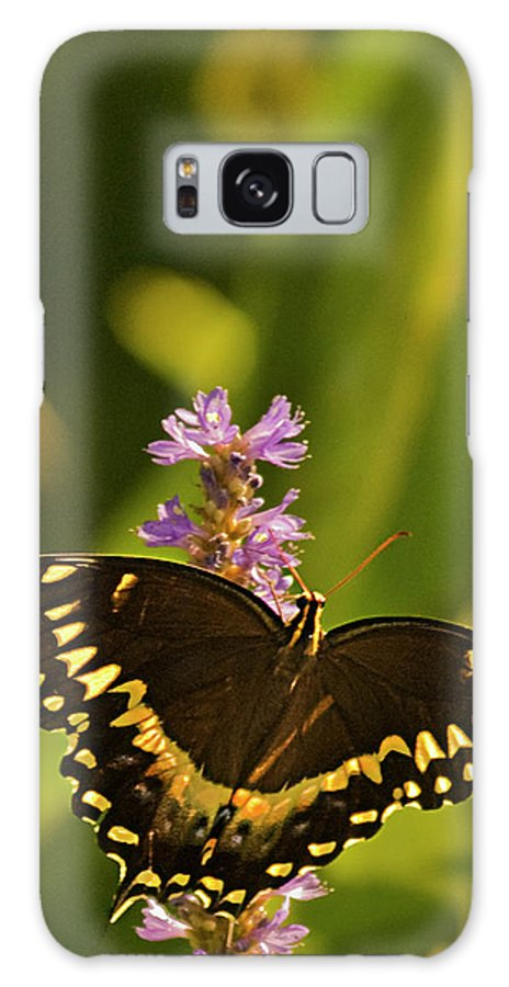Monarch Butterflies Galaxy S8 Case featuring the photograph Lone Monarch by Frank Feliciano