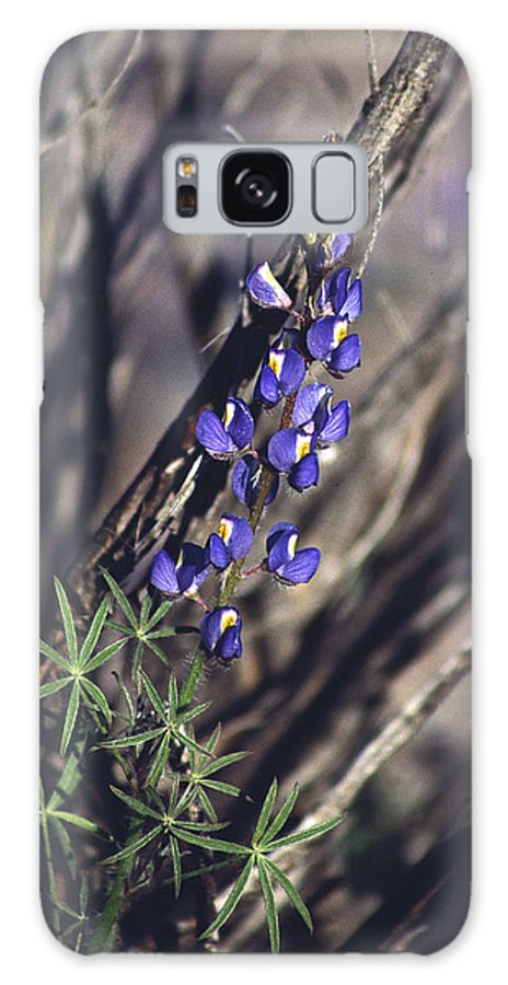 Flower Galaxy S8 Case featuring the photograph Lonely Lupine by Randy Oberg