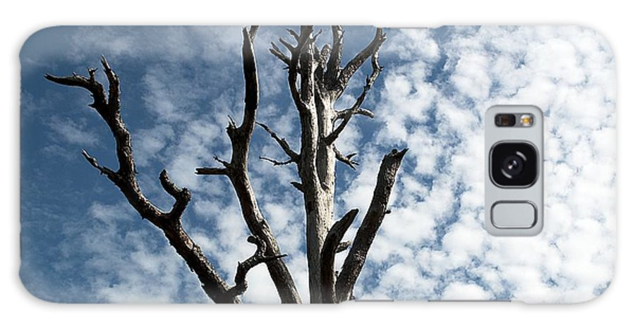 Tree Galaxy S8 Case featuring the photograph Lonely Tree by Kenneth Albin