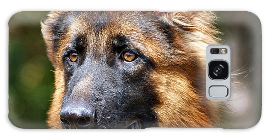 German Shepherd Galaxy S8 Case featuring the photograph Long Coated German Shepherd Dog by Sandy Keeton