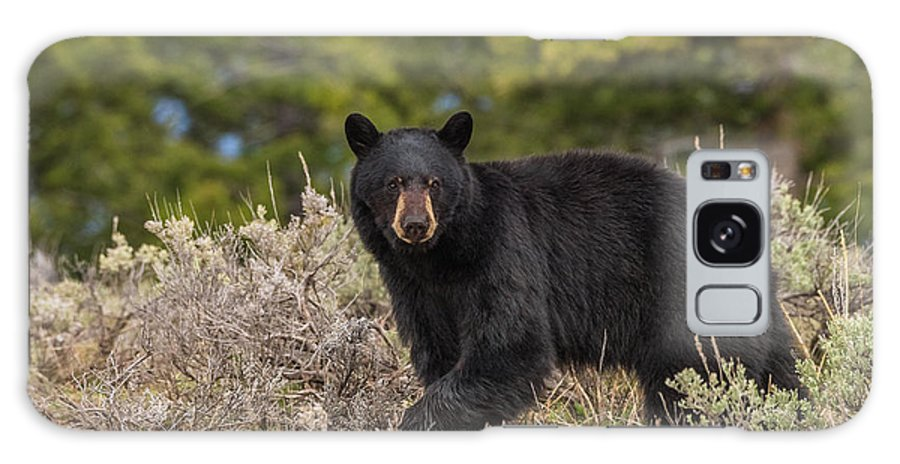 Black Bear Galaxy S8 Case featuring the photograph Look At Me by Yeates Photography