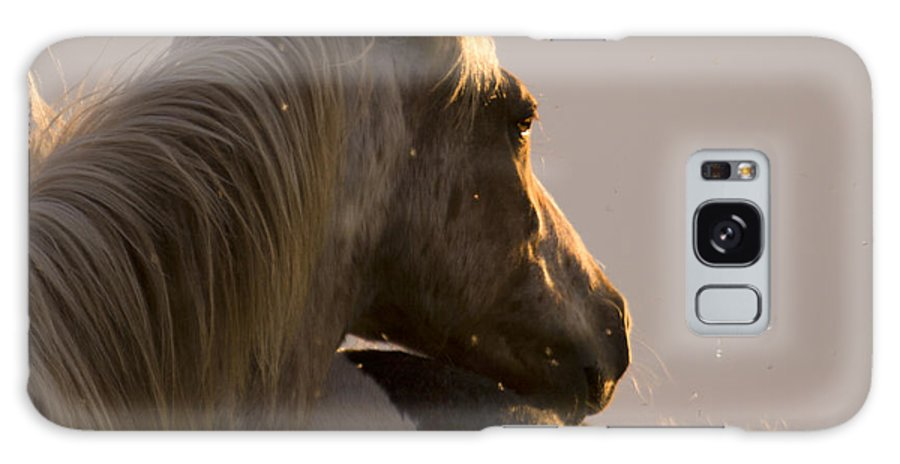 Horse Galaxy S8 Case featuring the photograph Looking At The Sunset by Angel Ciesniarska