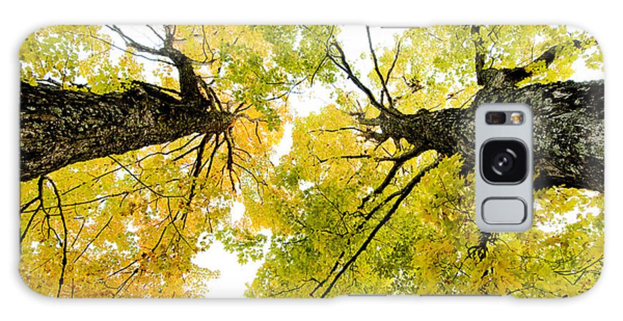 Fall Galaxy S8 Case featuring the photograph Looking Up At Fall by Greg Fortier