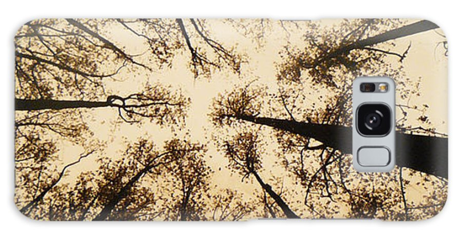 Trees Galaxy S8 Case featuring the photograph Looking Up by Jack Paolini