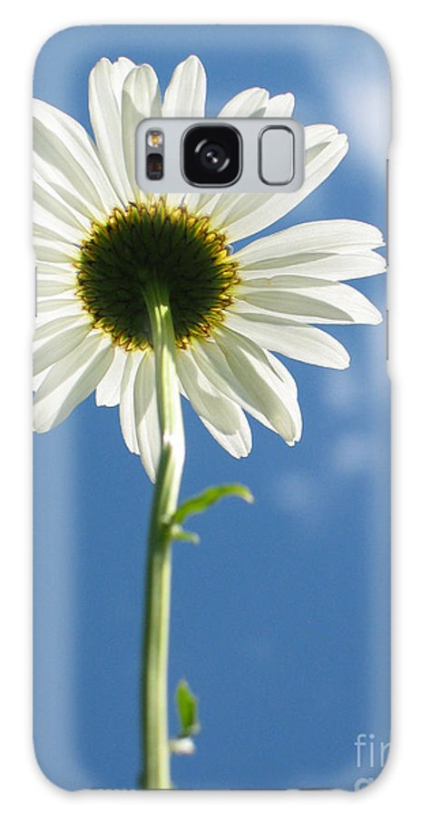Daisy Galaxy Case featuring the photograph Looking Up by Idaho Scenic Images Linda Lantzy