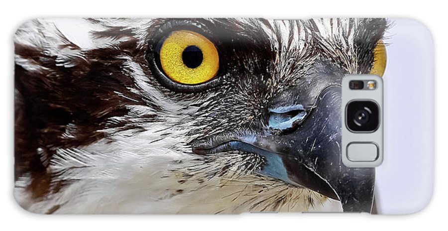 Osprey Galaxy S8 Case featuring the photograph Looks That Kill by Dennis Goodman