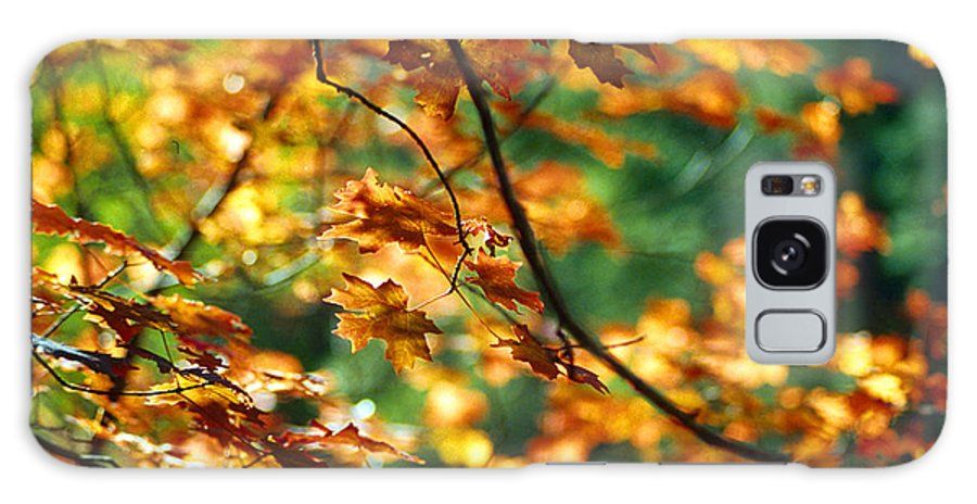 Fall Color Galaxy S8 Case featuring the photograph Lost In Leaves by Kathy McClure