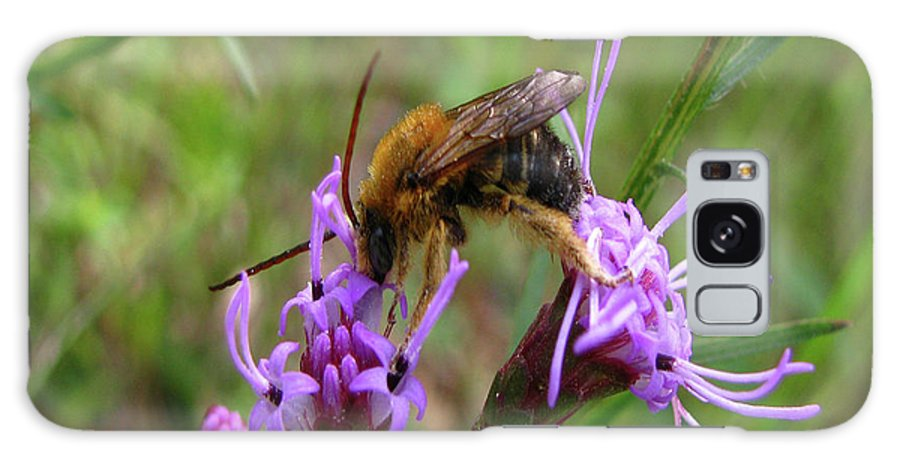 Bee Galaxy S8 Case featuring the photograph Lost Treasures by Donna Brown