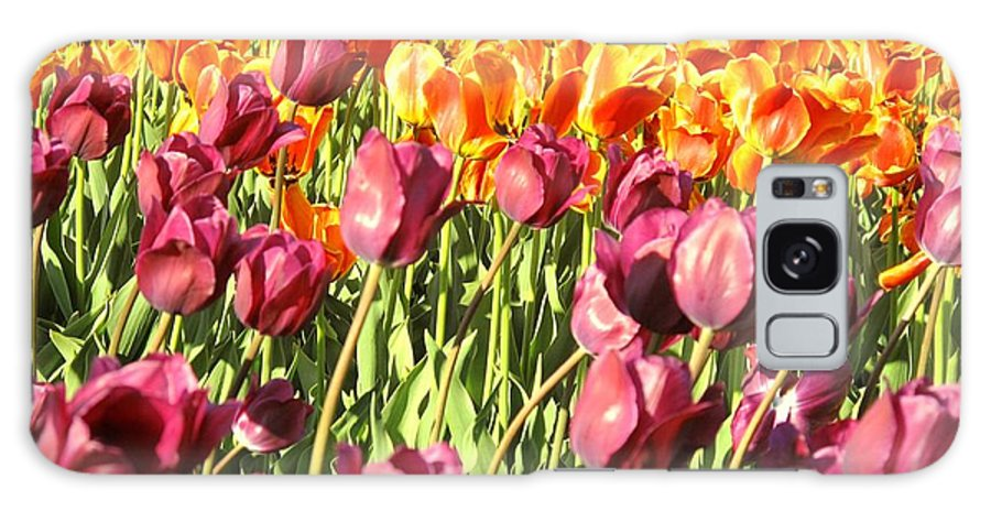 Tulips Galaxy S8 Case featuring the photograph Lots Of Tulips by Ian MacDonald