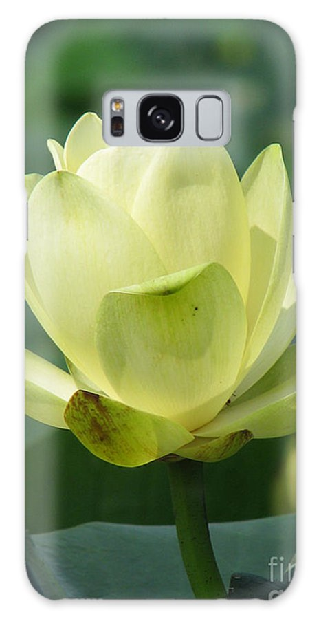 Lotus Galaxy S8 Case featuring the photograph Lotus by Amanda Barcon
