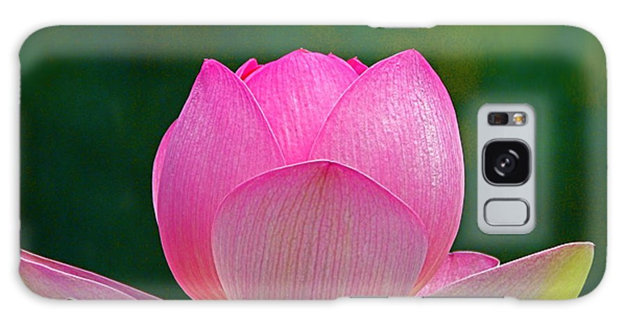 Flower Galaxy S8 Case featuring the photograph Lotus Blossom 842010 by Byron Varvarigos