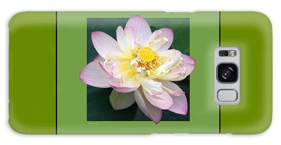 Lotus Galaxy Case featuring the photograph Lotus On Green by John Lautermilch