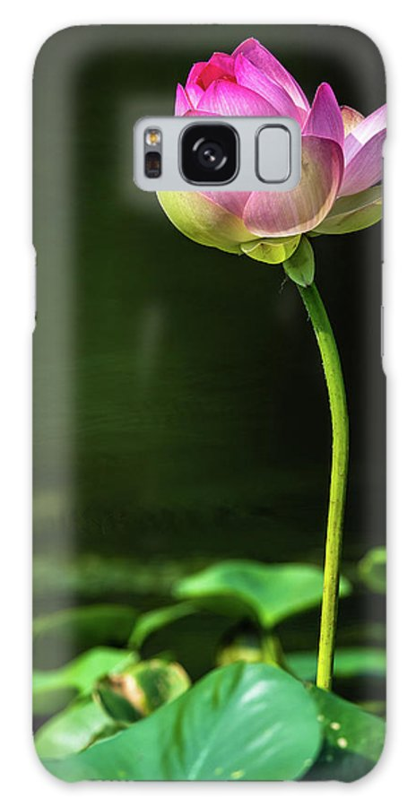 Lotus Flowers Galaxy Case featuring the photograph Lotus by Tom Stovall Sr