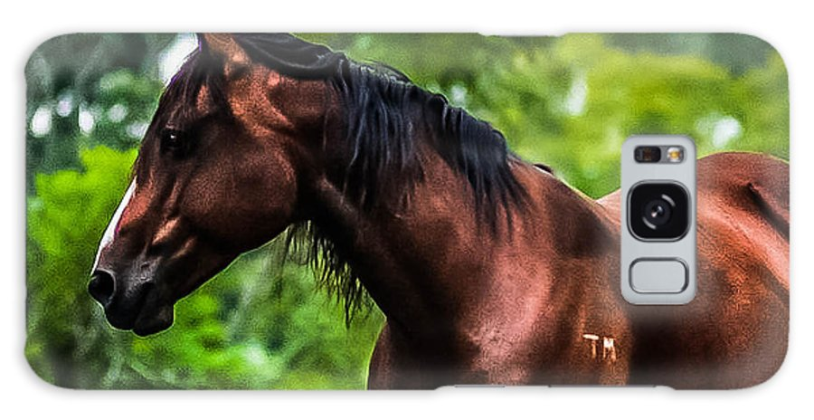 Galaxy S8 Case featuring the photograph Love Of Horses by Sunshine Nelson