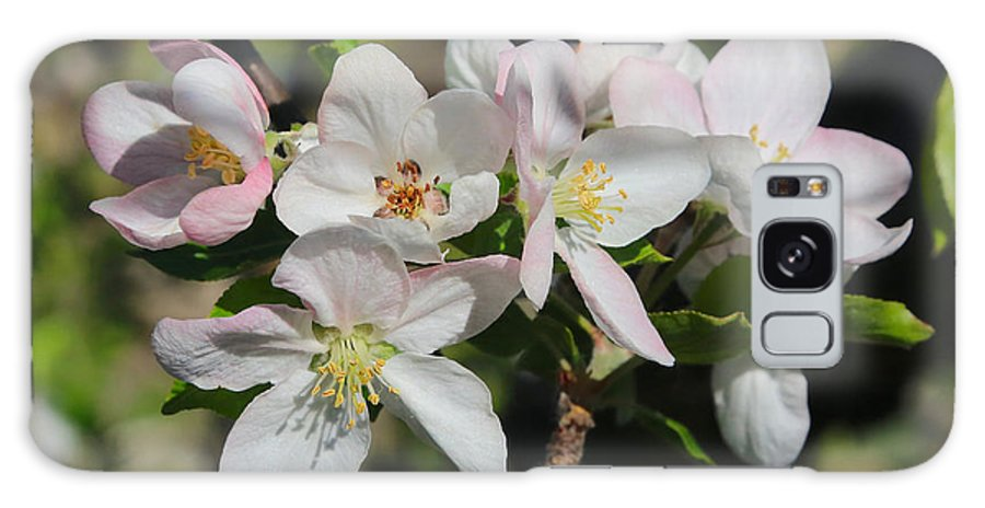 Apple Blossoms Galaxy S8 Case featuring the photograph Lovely Apple Blossoms by Carol Groenen