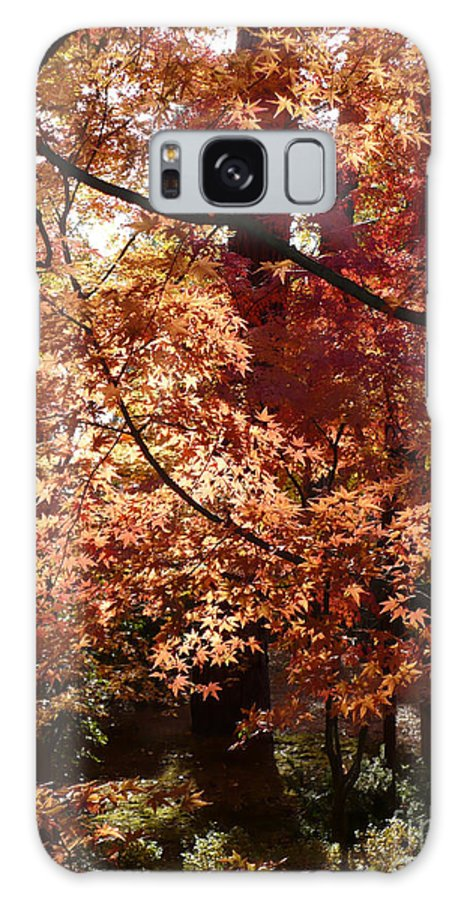 Fall Landscape Photograph Galaxy S8 Case featuring the photograph Lovely Autumn Tree by Carol Groenen