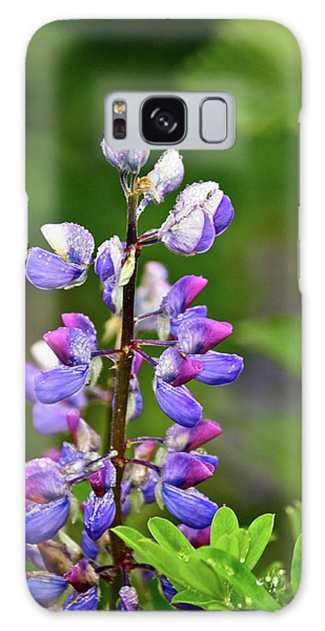 Lupine Galaxy S8 Case featuring the photograph Lovely Lupine by Diana Hatcher