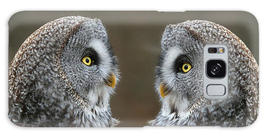 Great Gray Owl Galaxy S8 Case featuring the photograph Lovers Rendezvous by Heather King