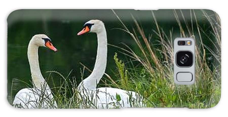 Clay Galaxy S8 Case featuring the photograph Loving Swans by Clayton Bruster