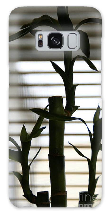 Lucky Bamboo Galaxy S8 Case featuring the photograph Lucky Bamboo by Linda Shafer