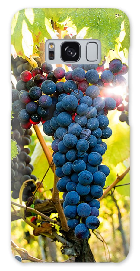 Grapes Galaxy S8 Case featuring the photograph Luminous Grapes by Jim DeLillo