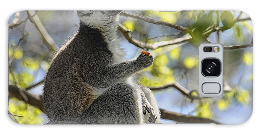 Lemur Galaxy S8 Case featuring the photograph Lunch Break by Keith Lovejoy
