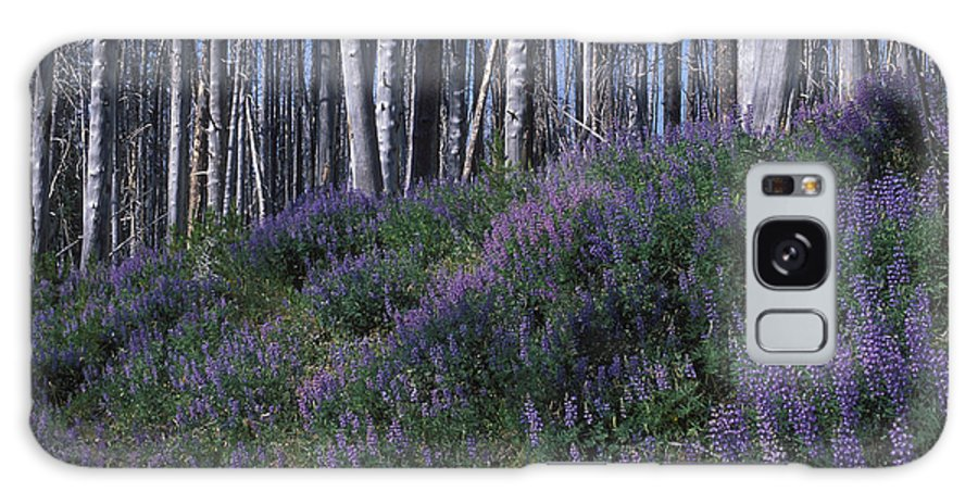 Yellowstone National Park Galaxy S8 Case featuring the photograph Lupine On Mt. Washburn - Yellowstone by Sandra Bronstein