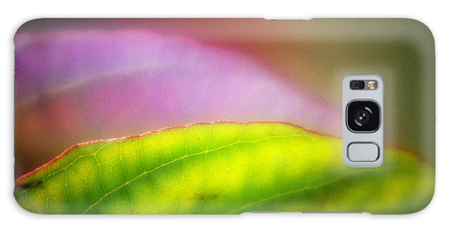 Macro Galaxy Case featuring the photograph Macro Leaf by Lee Santa