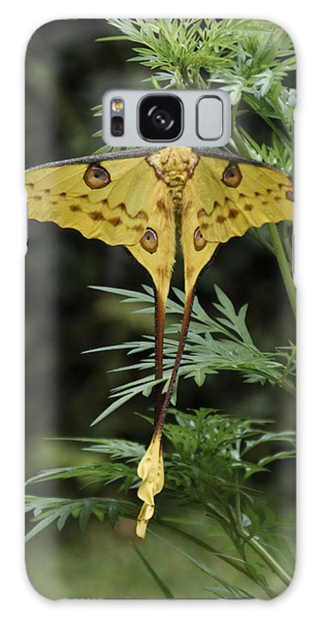 Madagascar Galaxy S8 Case featuring the photograph Madagascar Comet Moth by Michele Burgess