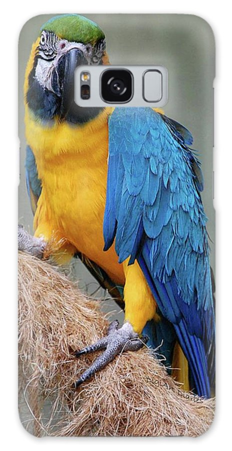 Blue And Yellow Macaw Galaxy S8 Case featuring the photograph Magnificent Macaw by DigiArt Diaries by Vicky B Fuller