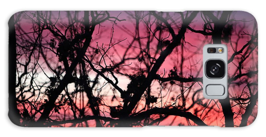 Sunset Galaxy Case featuring the photograph Magnificent Sunset And Trees by Nadine Rippelmeyer
