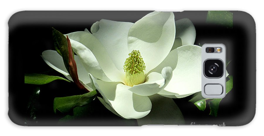 Hao Aiken Galaxy S8 Case featuring the photograph Magnificent White Magnolia - Photography by Hao Aiken