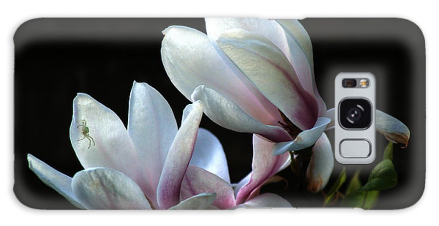 Magnolia Galaxy S8 Case featuring the photograph Magnolia And House Guest by Chris Day