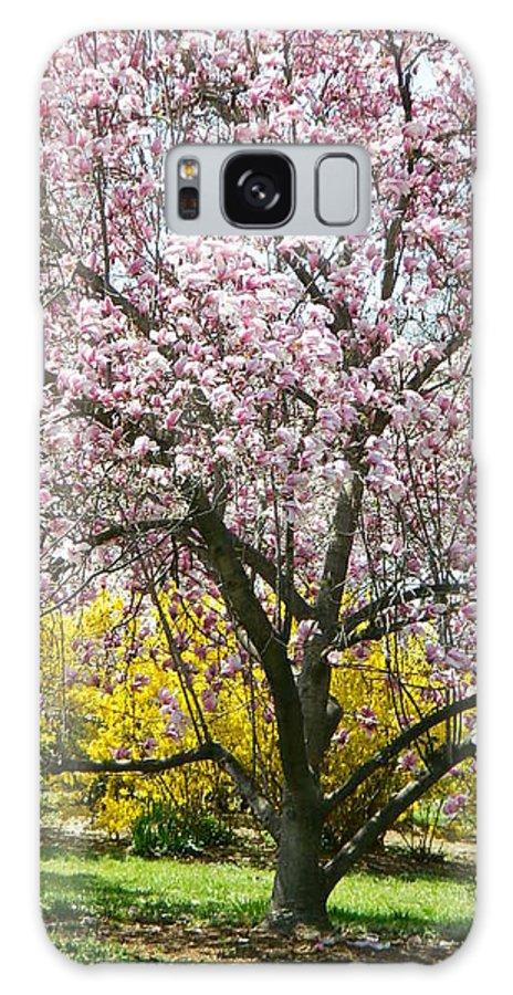 Magnolia Blossoms Galore Galaxy S8 Case featuring the photograph Magnolia Blossoms Galore by Emmy Vickers