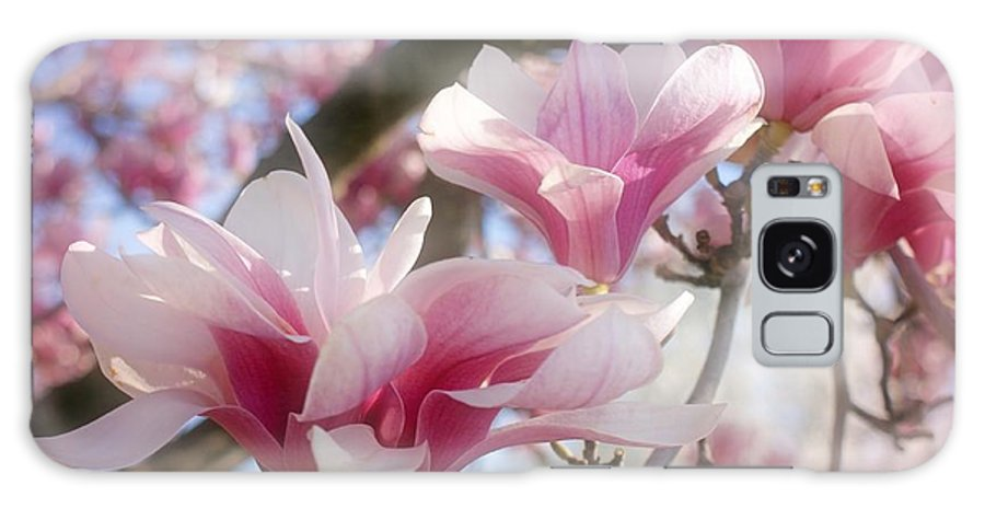 Magnolia Blossoms Galaxy S8 Case featuring the photograph Magnolia Blossoms by Sandy Keeton