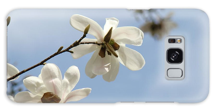 Magnolia Galaxy S8 Case featuring the photograph Magnolia Flowers White Magnolia Tree Art 2 Blue Sky Giclee Prints Baslee Troutman by Baslee Troutman