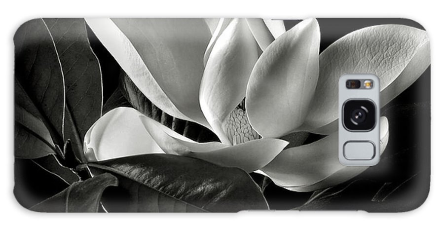 Flower Galaxy Case featuring the photograph Magnolia In Black And White by Endre Balogh