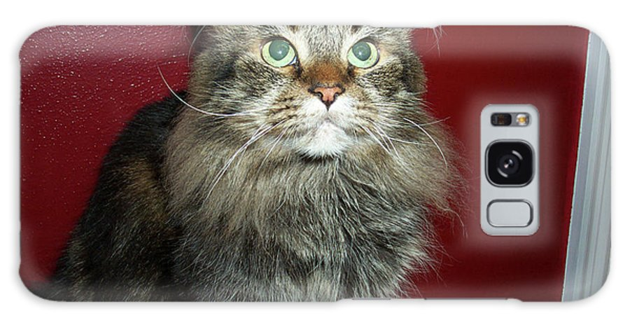 Maine Coon Galaxy S8 Case featuring the photograph Maine Coon Portrait by Michael Munster