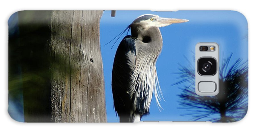 Spokane Galaxy S8 Case featuring the photograph Majestic Great Blue Heron by Ben Upham III