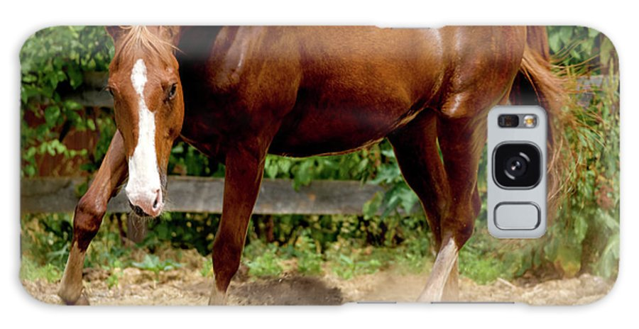 Horse Galaxy S8 Case featuring the photograph Majestic Horse by Julie Niemela