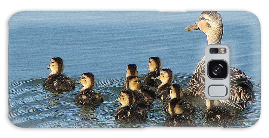 Ducks Galaxy S8 Case featuring the photograph Make Way For Ducklings by T Guy Spencer