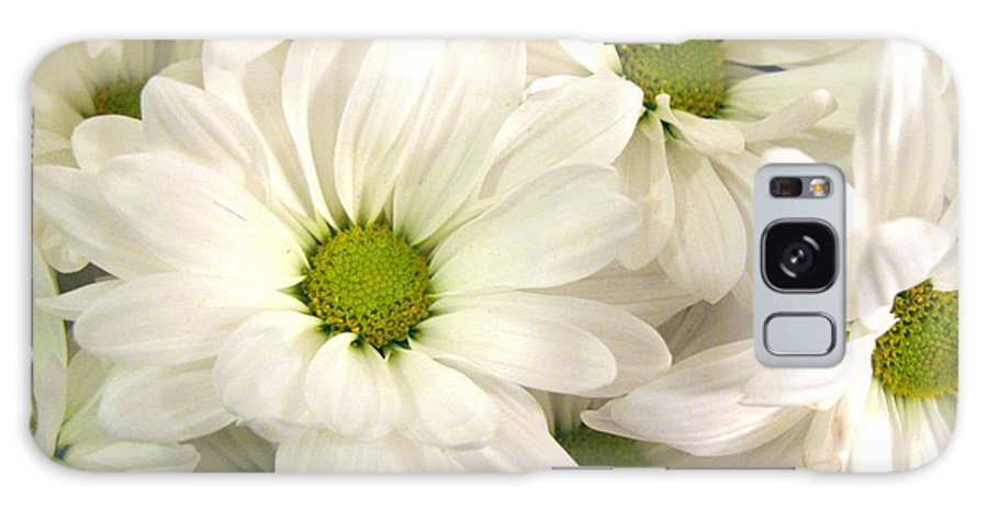 Daisy Galaxy S8 Case featuring the photograph Makes Me Smile by Carol Sweetwood