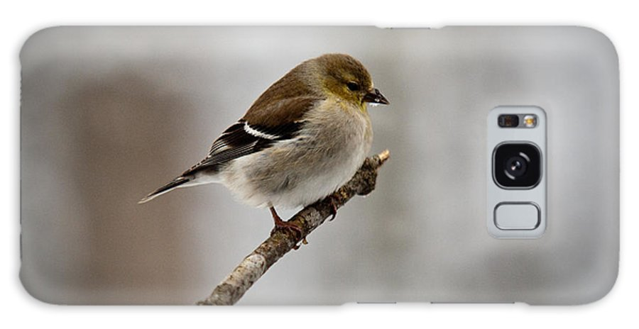 Male Galaxy S8 Case featuring the photograph Male American Golden Finch by Douglas Barnett