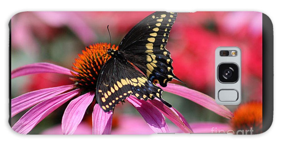 Insect Galaxy S8 Case featuring the photograph Male Black Swallowtail Butterfly On Echinacea Plant by Karen Adams