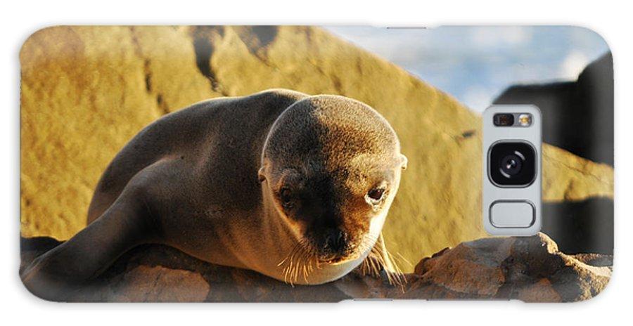 Malibu Galaxy S8 Case featuring the photograph Malibu California Baby Sea Lion by Kyle Hanson
