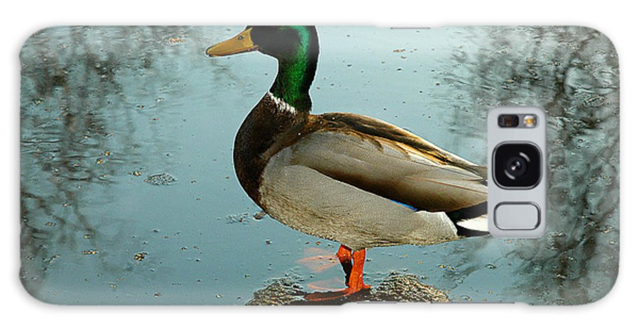 Clay Galaxy Case featuring the photograph Mallard by Clayton Bruster