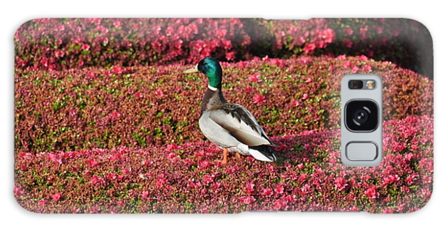 Bird Galaxy S8 Case featuring the photograph Mallard On A Floral Carpet by Rich Bodane