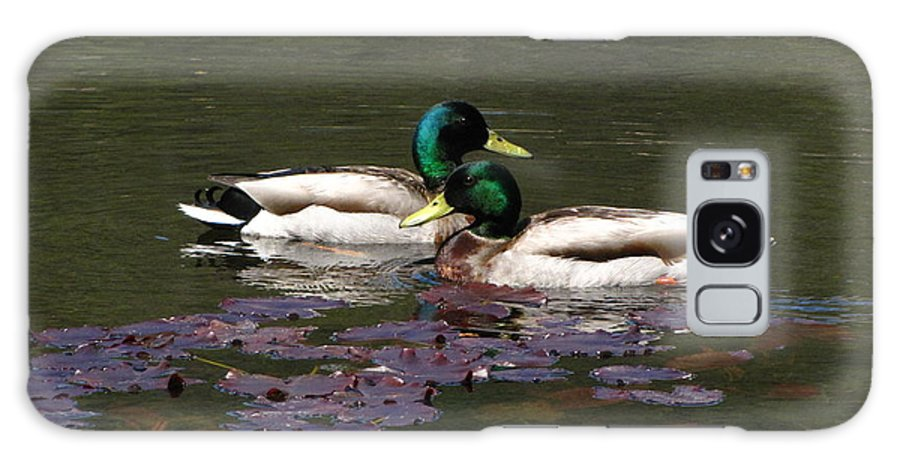 Lilies Galaxy S8 Case featuring the photograph Mallards Amoung The Lilies by Melissa Parks